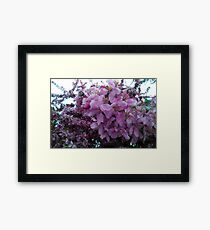 Blossoms.  Framed Print