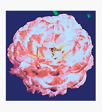 Floral Flower Art - Retro Rose Navy and Pink Vintage Flowers Photographic Print