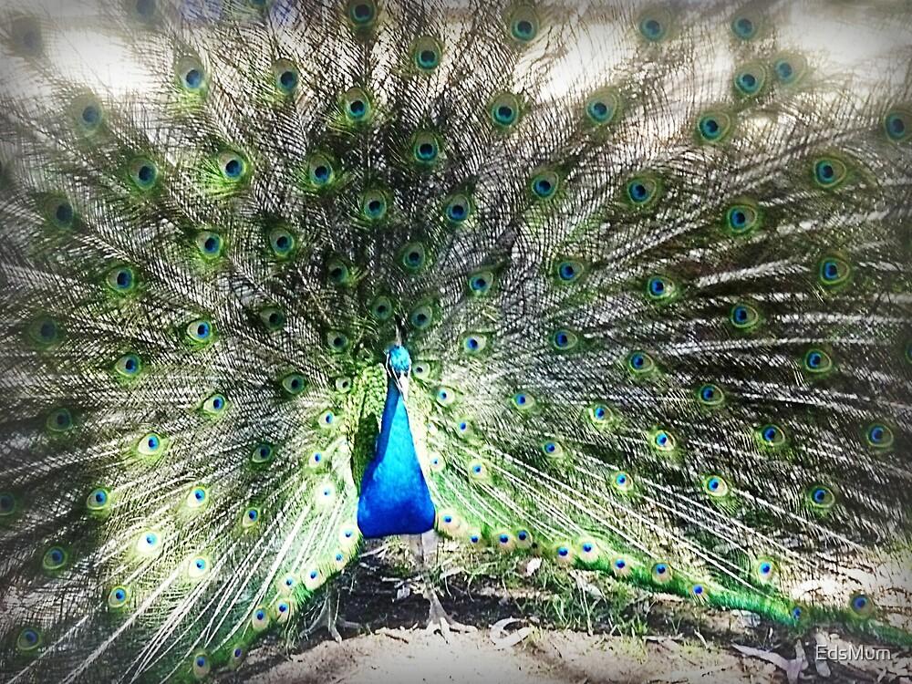 *Gorgeous Peacock - Donegan's Farm, Gordon,Vic. Australia  by EdsMum