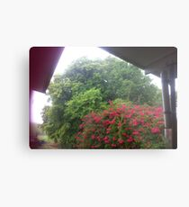 Sun Shower, Trees, Bougainvillea Tree,  Metal Print