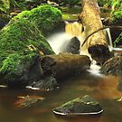 Hebe River feeder..#2 by phillip wise