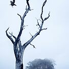 The Crow by Svetlana Sewell
