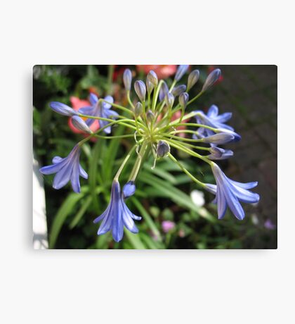 Summer allium Canvas Print