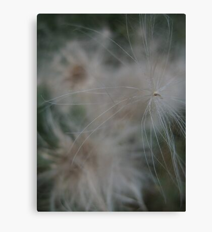 Fairy seed Canvas Print