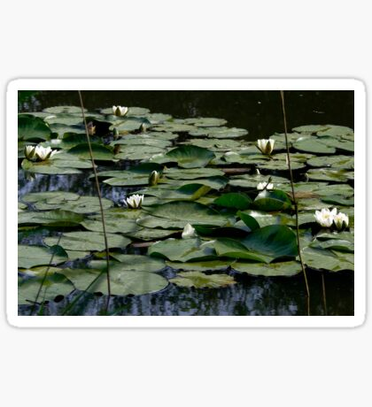 Waterlilies  Sticker