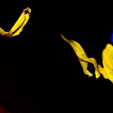 Floating Petals by Quigi