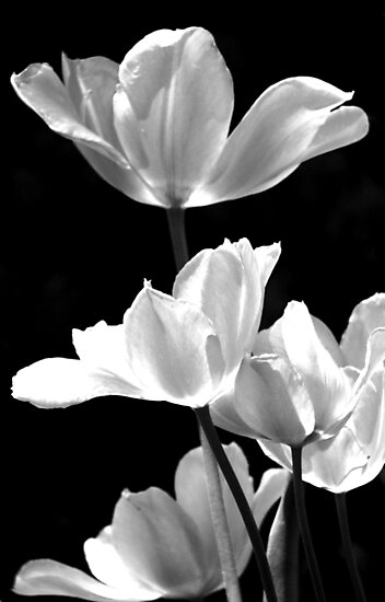 Spring In Black And White by AngieDavies