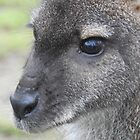 Little Miss Wallaby by wenniewombat