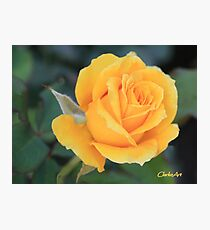 OPENING YELLOW ROSEBUD AGAINST LEAVES Photographic Print