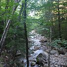Forest along Sabbath Day Brook NH by Ilan Cohen