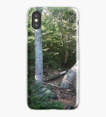 Forest in Crawford Notch state park NH iPhone Case/Skin