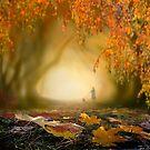 Fall by Igor Zenin
