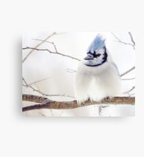 Feeling A Little Blue  Canvas Print