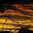 Yellow Sky by Deirdreb