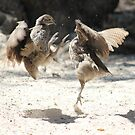 Foul, or is it a Fowl move!!! by poohsmate