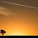 Tree by Joel Bramley