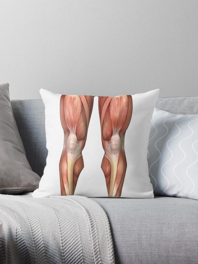 Cojines «Diagrama que ilustra los grupos musculares en el frente de ...