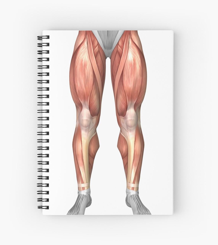 Cuadernos de espiral «Diagrama que ilustra los grupos musculares en ...