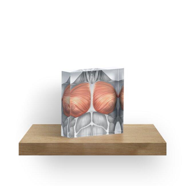 Bloques acrílicos «Anatomía de los músculos pectorales masculinos ...