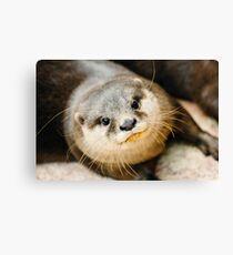 Otter Closeup Canvas Print