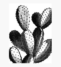 Black and White Cactus Photographic Print