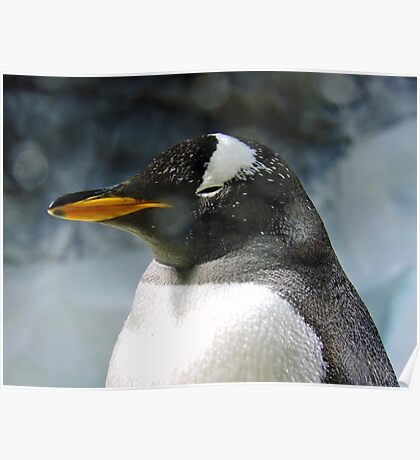 Sleepy Snowy Penguin Poster