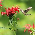 Debbie Roberts Photography Birds and Critters by Debbie  Roberts