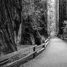 Muir Woods by Radek Hofman