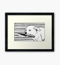 Knife Dog Framed Print
