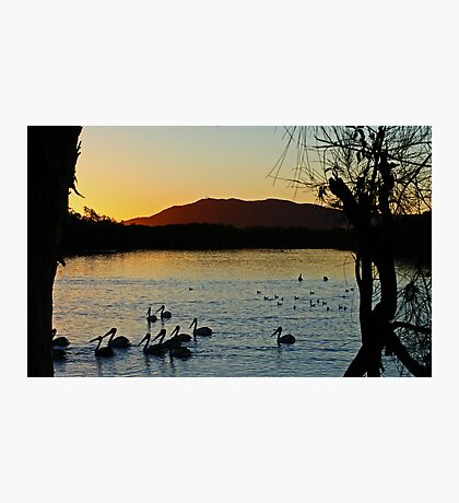 Pelicans At Sunset Photographic Print