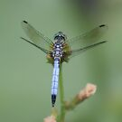 dragonfly by Jason Dymock Photography