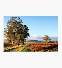 Autumn Sunshine in the Barossa Valley Photographic Print