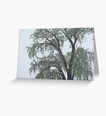 Tree in Snow Storm Greeting Card