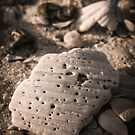 Sea Shells and Sand by NCCreation