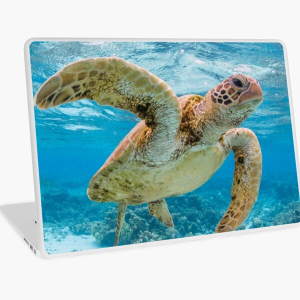 Turtle star Laptop Skin