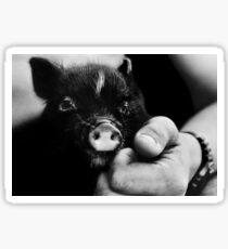 Cute little piglet Sticker
