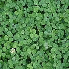 Can you see a four-leaved one? by Carol Dumousseau