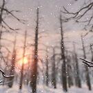 A Winter Night's Dream by Hannah Joy Patterson