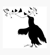 Smart Bird Photographic Print