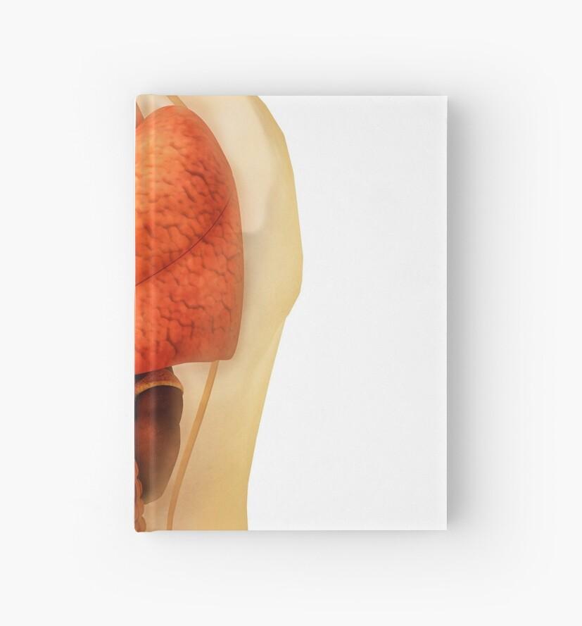 Cuadernos de tapa dura «Anatomía del cuerpo humano mostrando órganos ...