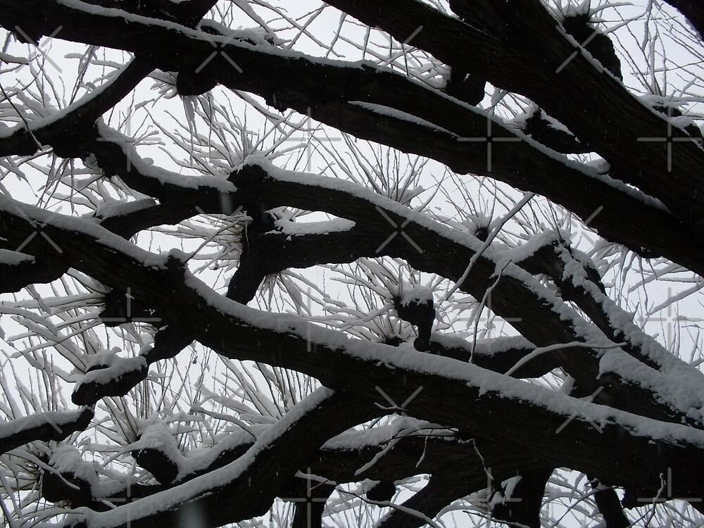 Snow on Branches by SHappe