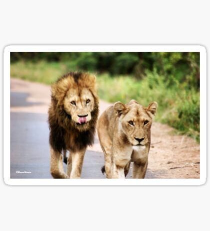 LION - Panthera leo Sticker