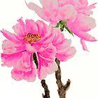 2 pink peonies watercolor  by ColorandColor