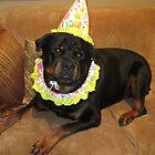 Birthday dog by BOBBYBABE