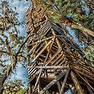 Canopy Walk Tower  by John  Kapusta