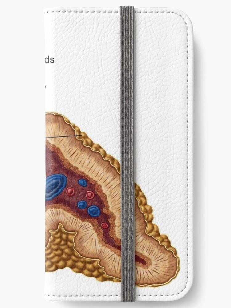 Fundas tarjetero para iPhone «Anatomía de la glándula suprarrenal ...