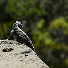 Lizard on the look out by ABGPhotography