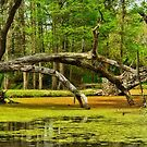 Pond on Avery Island  by cclaude