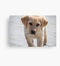 Guess what? Canvas Print