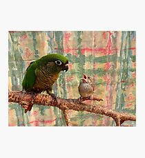 Everybody Needs A Little Encouragement - Sparrow & Parrot - NZ Photographic Print